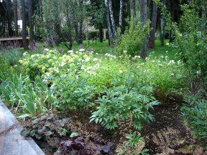 Фрагмент сложного цветника из многолетников с включением групп кустарников в полутеневой зоне.