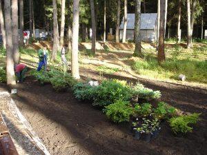 Посадка хвойных кустарников, рододендронов и многолетников при создании сложного цветника в лесной зоне частного участка